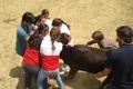 Treino do Grupo Feminino das Forcadas de Cascais