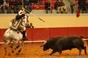 Imagens do 54º Concurso de Ganadarias de Évora