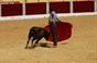 Galeria Grafica del Trofeo al mejor aficionado práctico de la Peña Taurina L. Reina de Almendralejo.