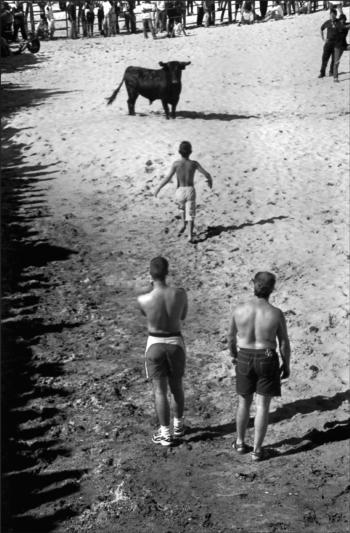 Golegã abre exposição fotográfica sobre touros numa praia fluvial