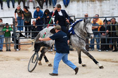 Demonstração de Cavalos de Toureio na Brandoa (AMADORA)