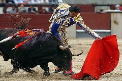 EL CID Colhido esta tarde em Pamplona
