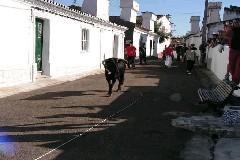 Elvas - Largada à corda ao uso dos Açores