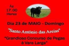 Concurso de Pegas à Vara Larga em Santo António das Areias