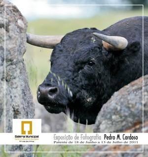 Pedro Cardoso Expõe em Arruda dos Vinhos