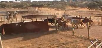 Video do embarque de toiros na ganadaria Varela Crujo