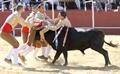 Imagens do Festival Taurino do Pinhal Novo