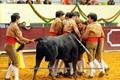 Imagens dos Festival Taurino em Albufeira