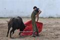 Academia do Campo Pequeno tenta na ganadaria lopes Branco