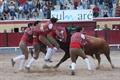 Imagens da corrida de toiros mista em Vila Franca de Xira