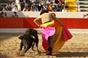 Imagens do Festival dos Bandarilheiros em Alcochete, pela objectiva de Rui Porfirio.
