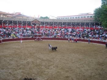 Toiros Rosa Rodrigues na Feira de Tafalla (Espanha)