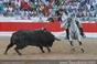 Imagens do concurso de ganaderias de Alcochete