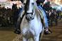 Imagens da Feira do Cavalo na Golegã