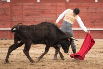 Fim-de-semana triunfal para Diogo Peseiro