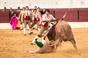 Imagens do festival taurino no Sobral de Monte Agraço