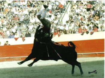 Bruno Cantinho despede-se das arenas dia 8 de Agosto em Beja