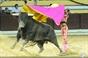 As imagens de Salvaterra - apresentação de Roca Rey